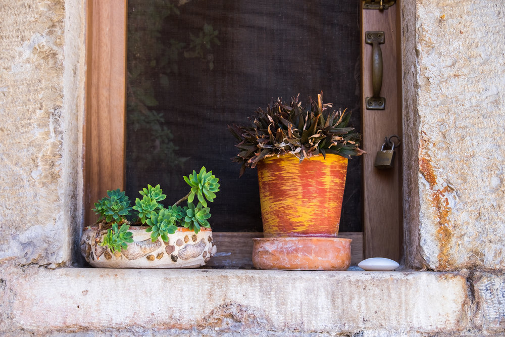 colorful potted plants and succulents with contrasting colors