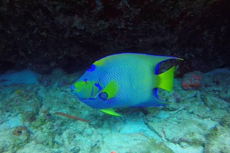 diving+3.jpg