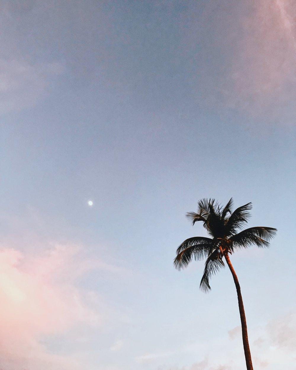 Palm Tree_CaymanIslands