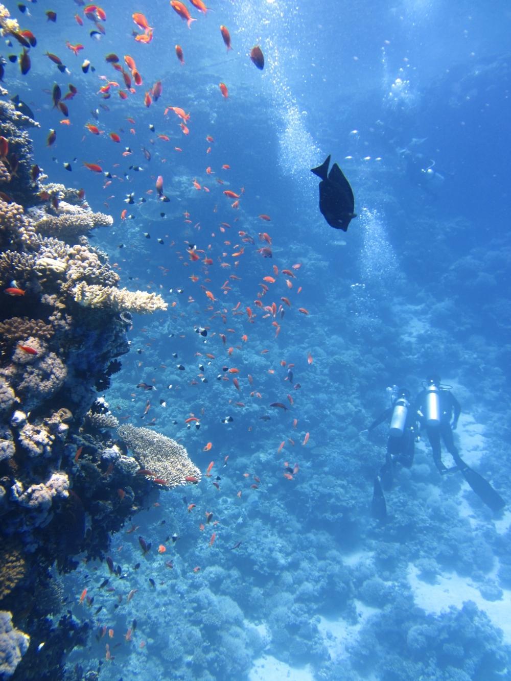 Cayman_Islands_diving