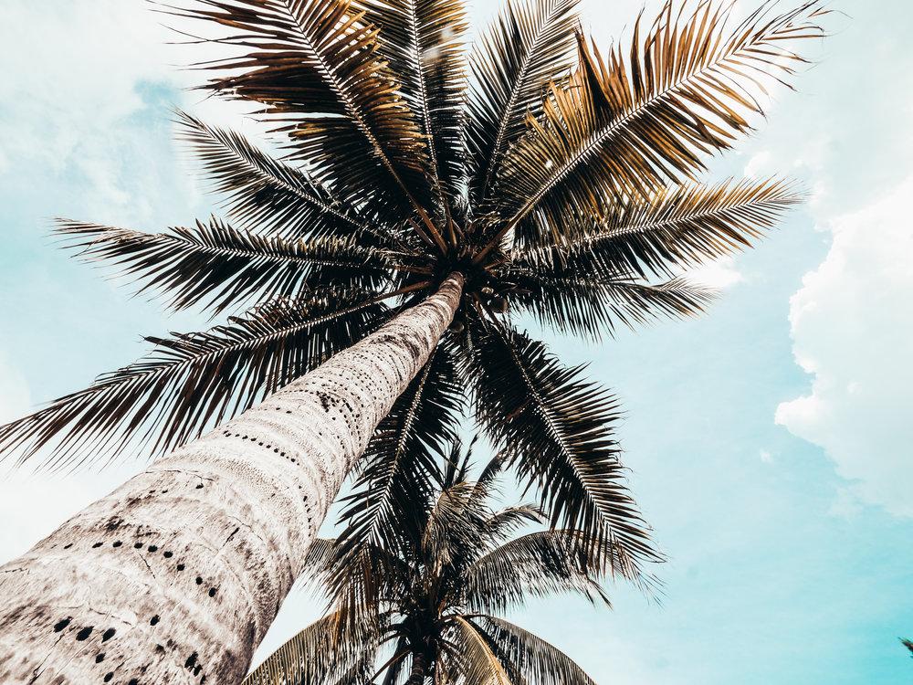 Cayman Kai_Cayman_Islands