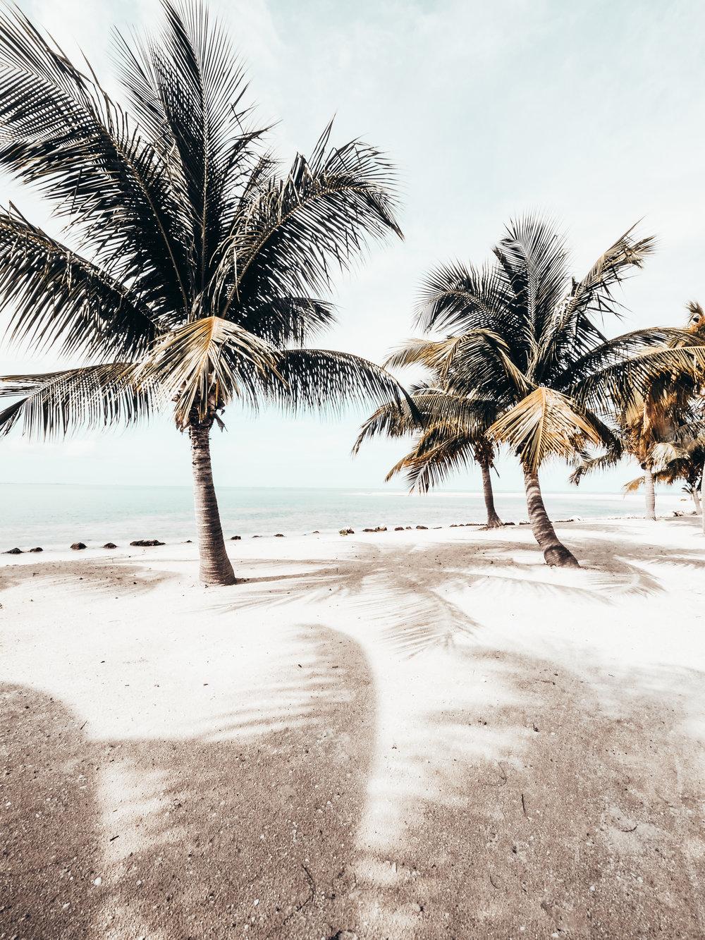 Palm Trees_cayman_Kai-Photography