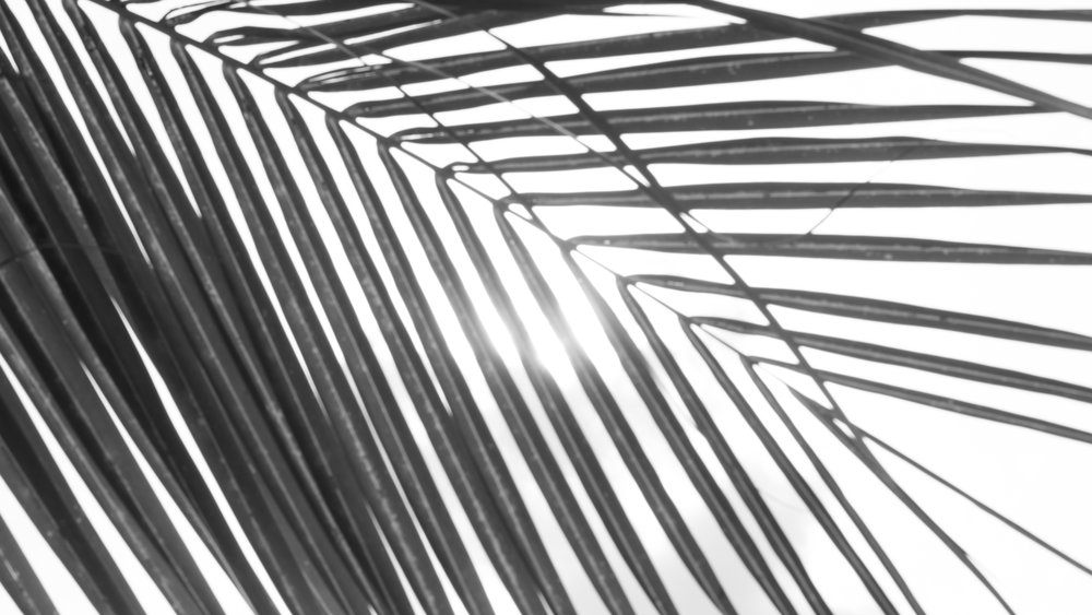 Palm Tree_Monica Walton