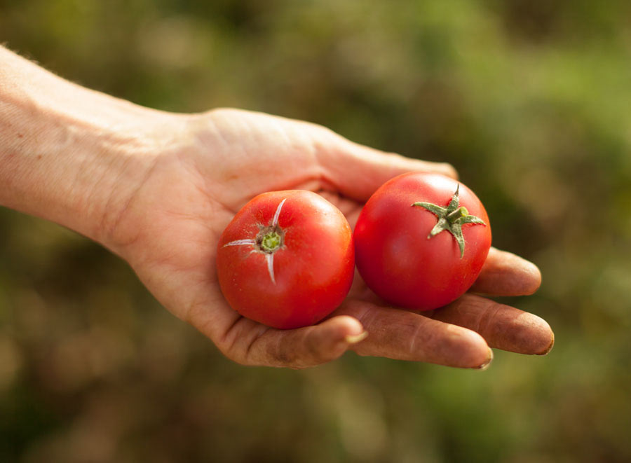 Food_photography_tomatoes_farm-to-fork_hand-picked_field_dirt.jpg