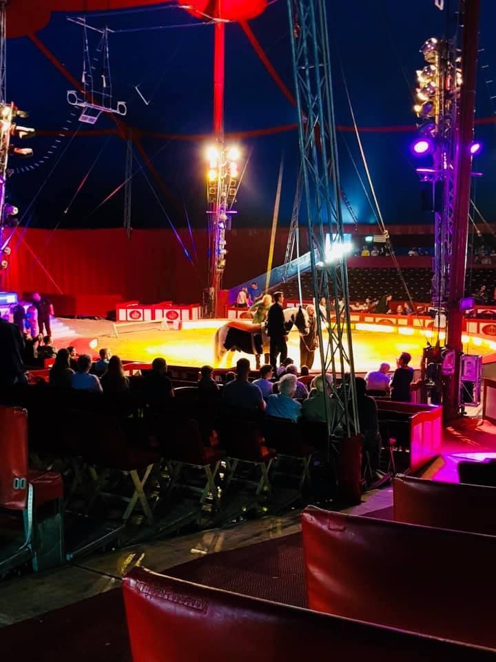 Heute sind wir mit unseren geehrten Patienten sowie Kollegen bei CIRCUS Krone - der größte Circus der Welt!
