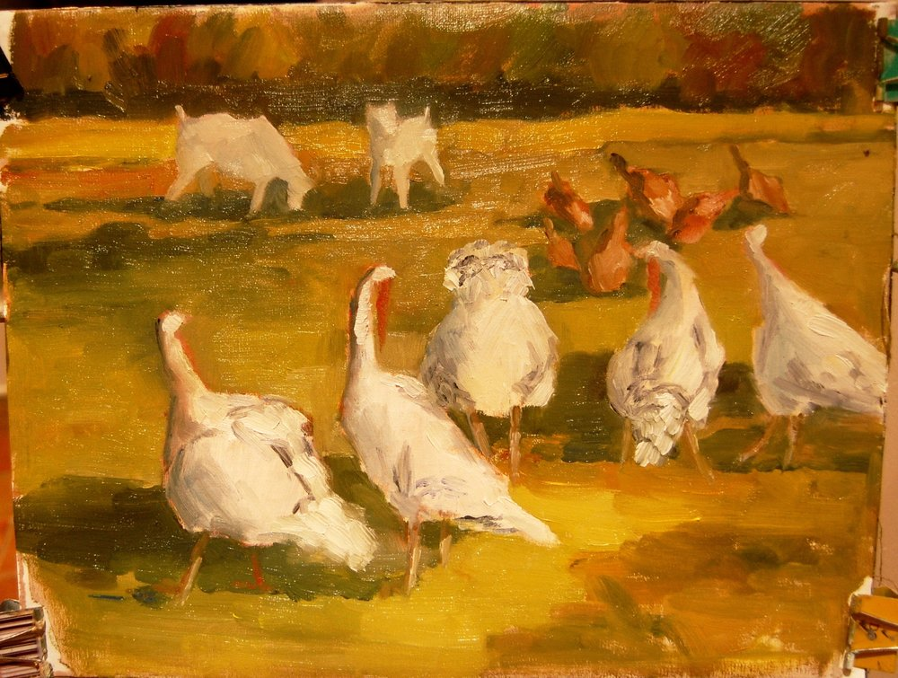 "Turkeys at Cherry Grove Farm   oil on canvas  11"" x 14"""