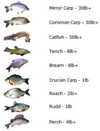 Manor Fishery UK fishing fish chart