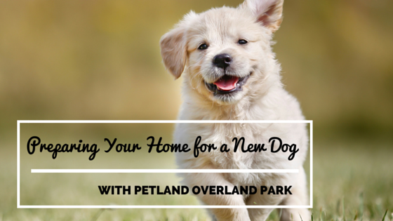 Preparing Your Home for a New Dog - Part 1
