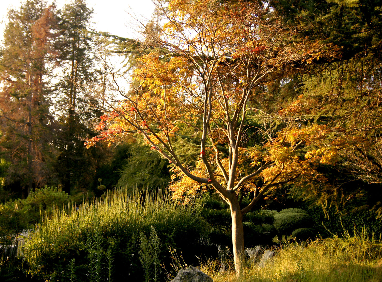 San Jose Featured Spot: Japanese Friendship Garden — escape from the bay