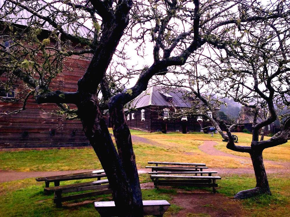 trees-outside-rotchev-house.jpg