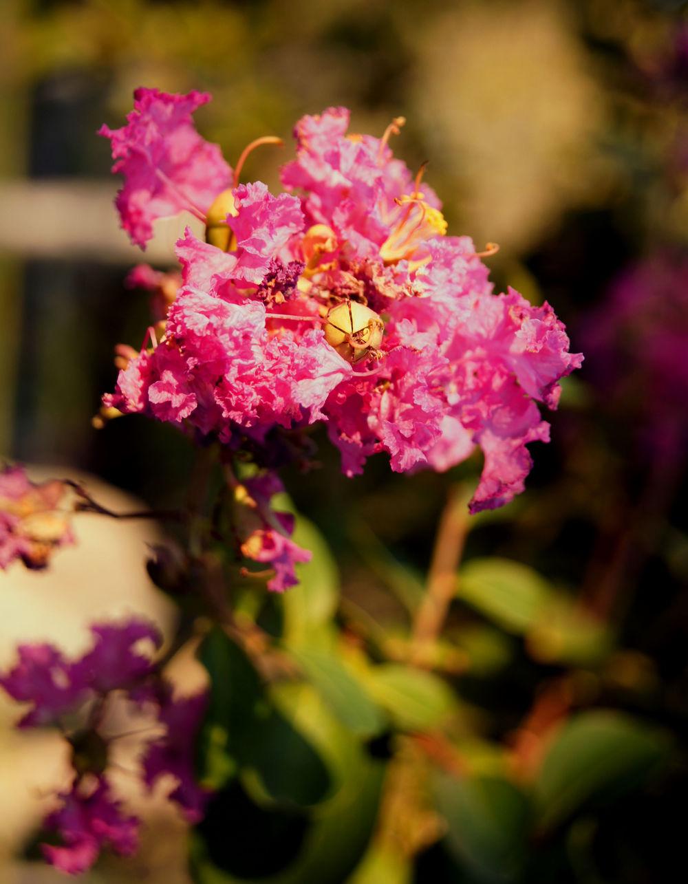 pink-flowers-2.jpg