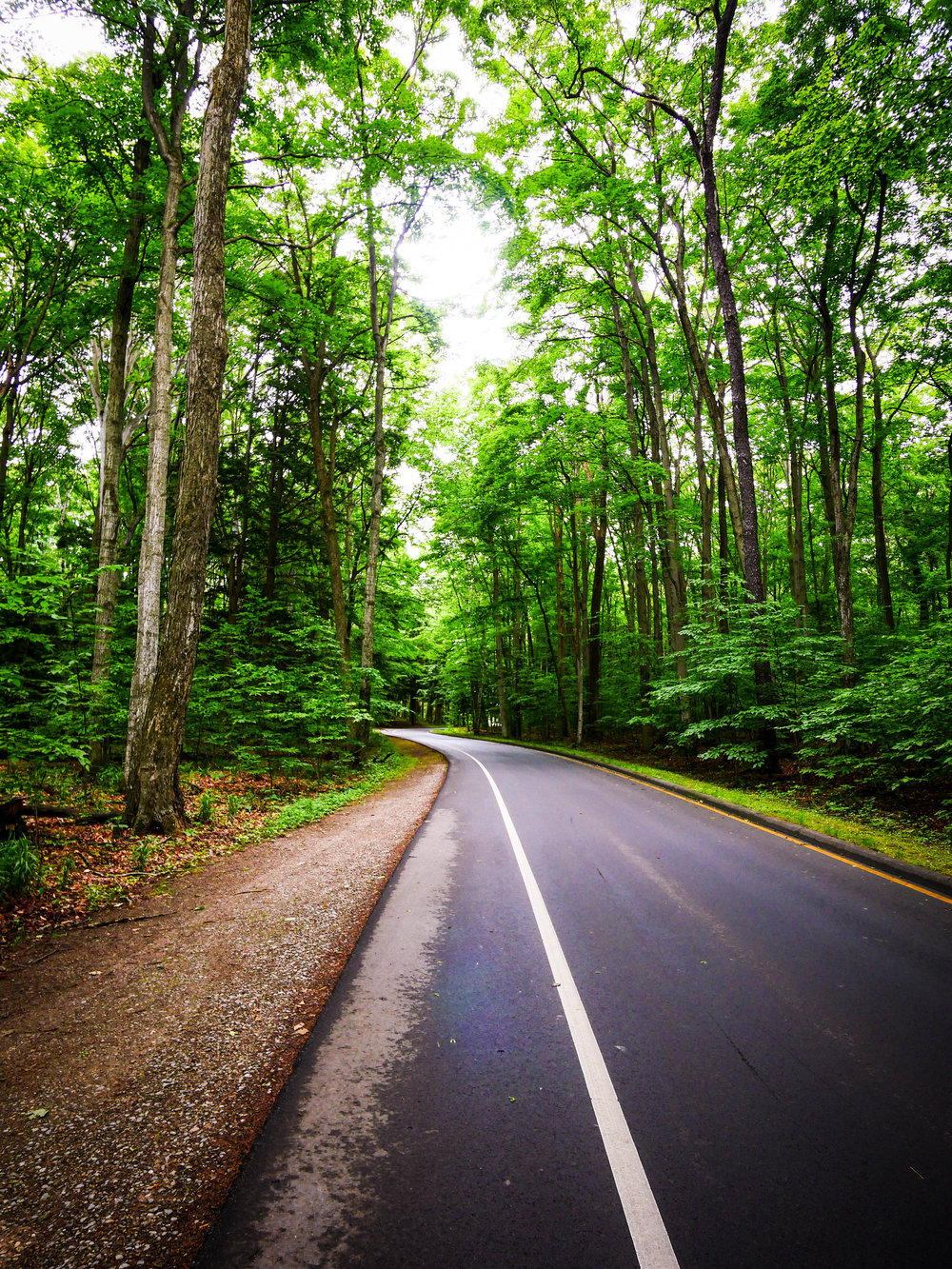 Explore the beautiful forests on this scenic drive through Sleeping Bear Dunes National Lakeshore.