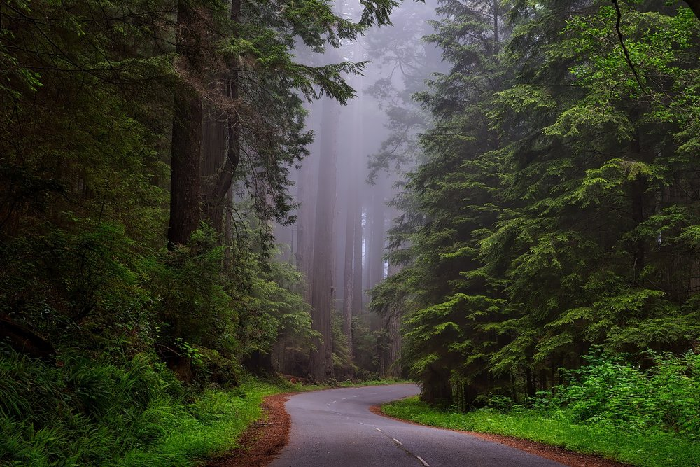 Driving through the towering redwoods