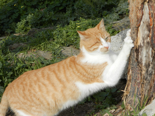 Ingi enjoys a scratch and a stretch!