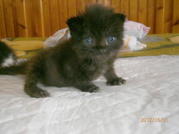 Dafni as a kitten