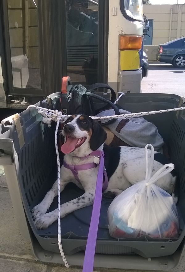 Luna felt safer in her transport box as we were waiting the car that took us to the airport