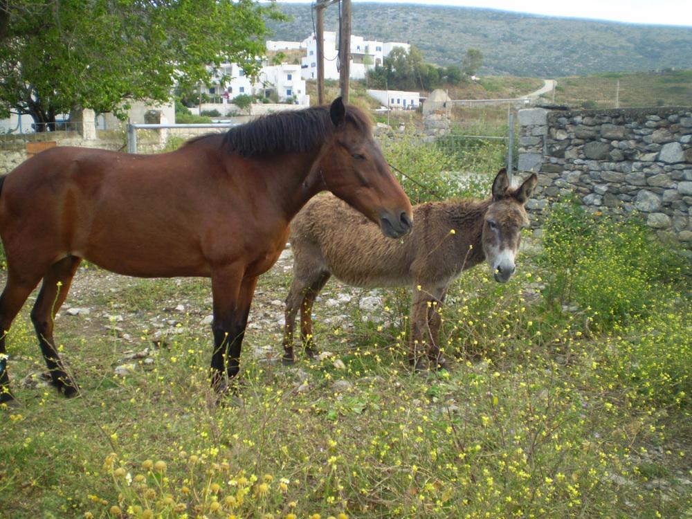 Horse-and-donkey.jpg