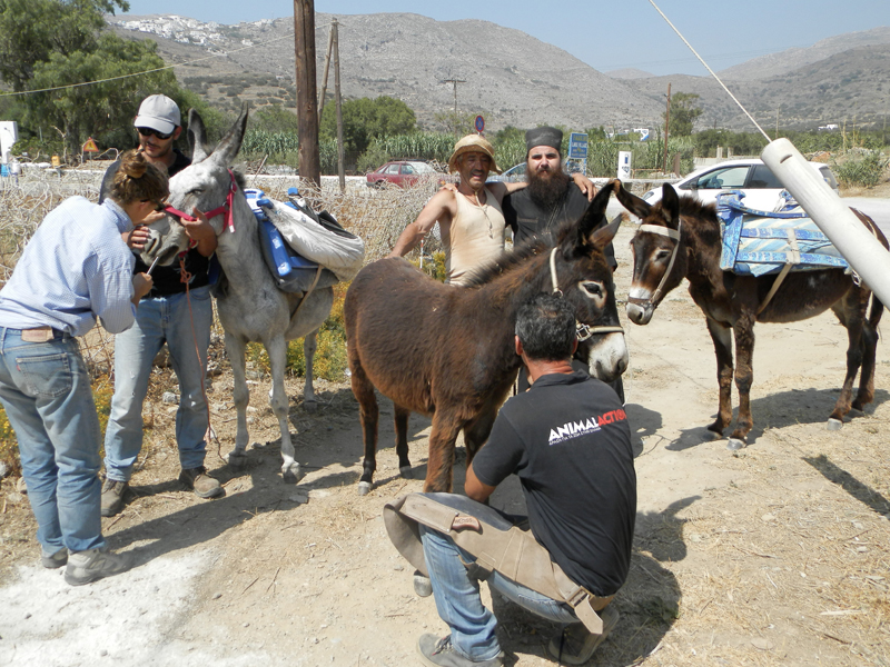 Animal Action at work in Amorgos, Greece, June 23–25, 2016
