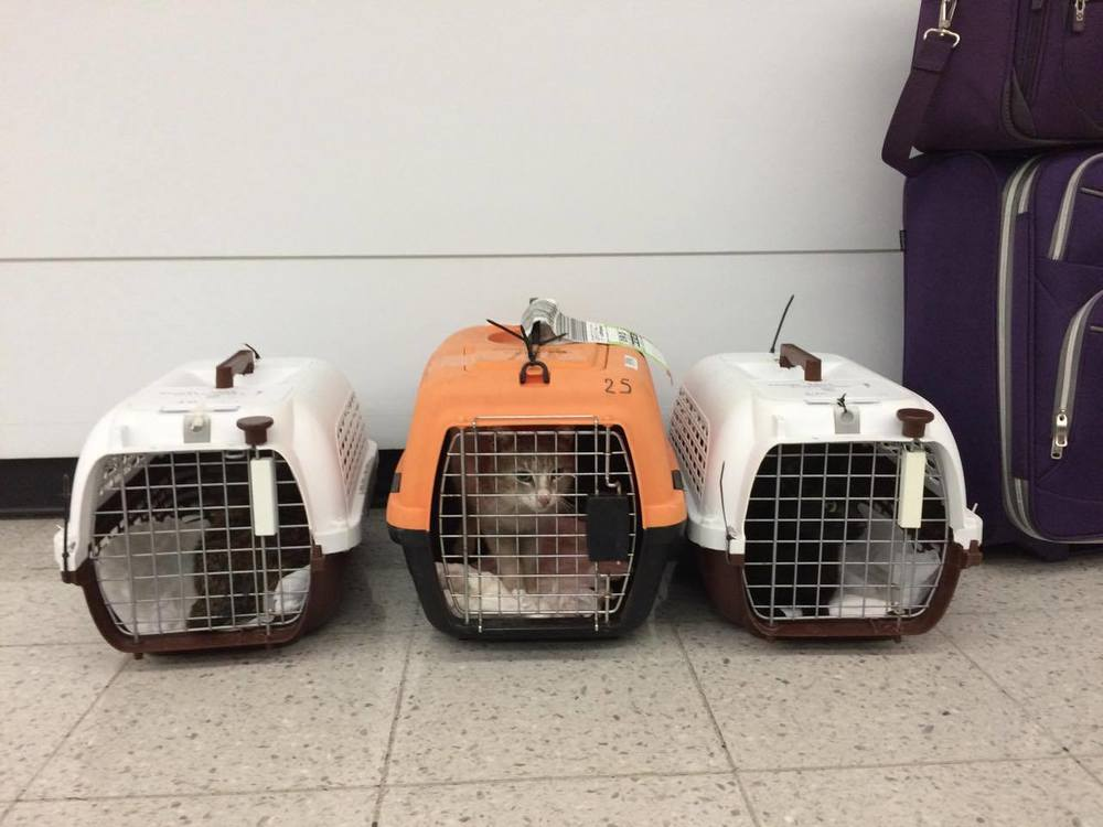 Arriving in Chicago with two other cats from Amorgos