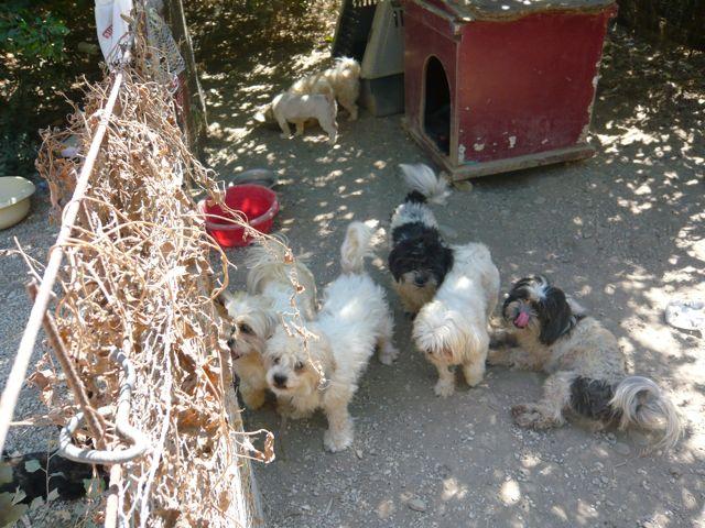 Abandoned-Dogs.jpg