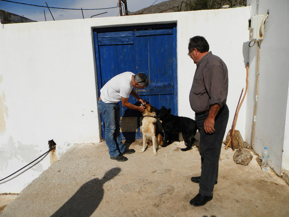 Dr. Manolis Vorisis examines the dogs of Stamatis Simos who brought them for their annual vaccination.