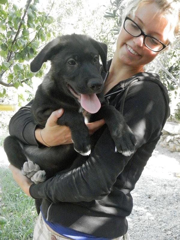 Bob as a puppy