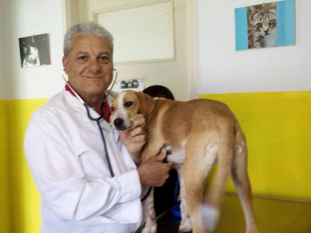 Dr. Vasalakis examines puppy Berto