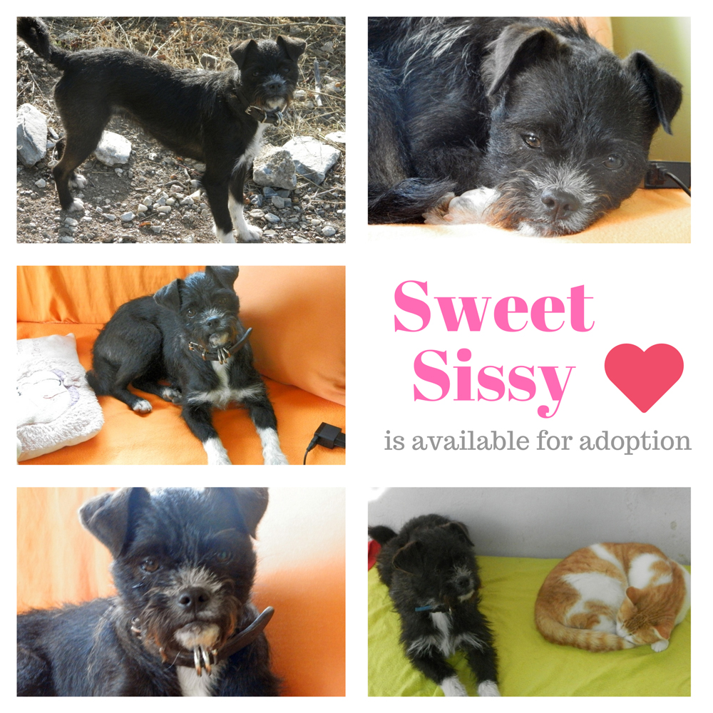 Sissy's microchip number is 941000016719465.