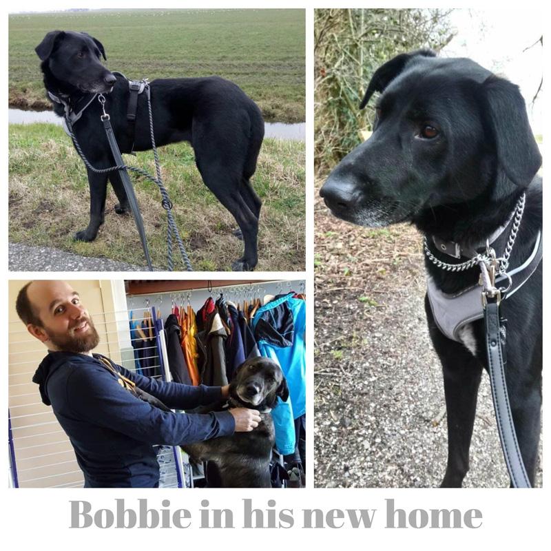a_bobbie-collage.jpg