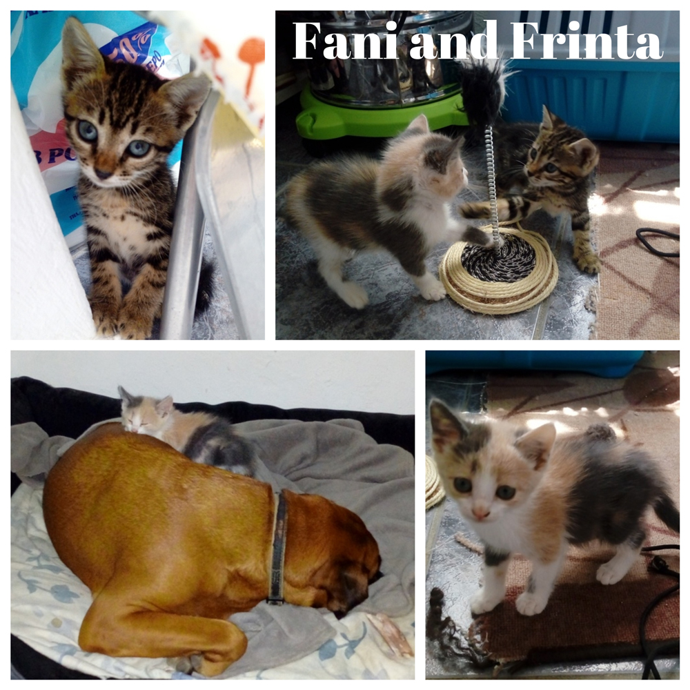 Fani-and-Frinta-collage.jpg
