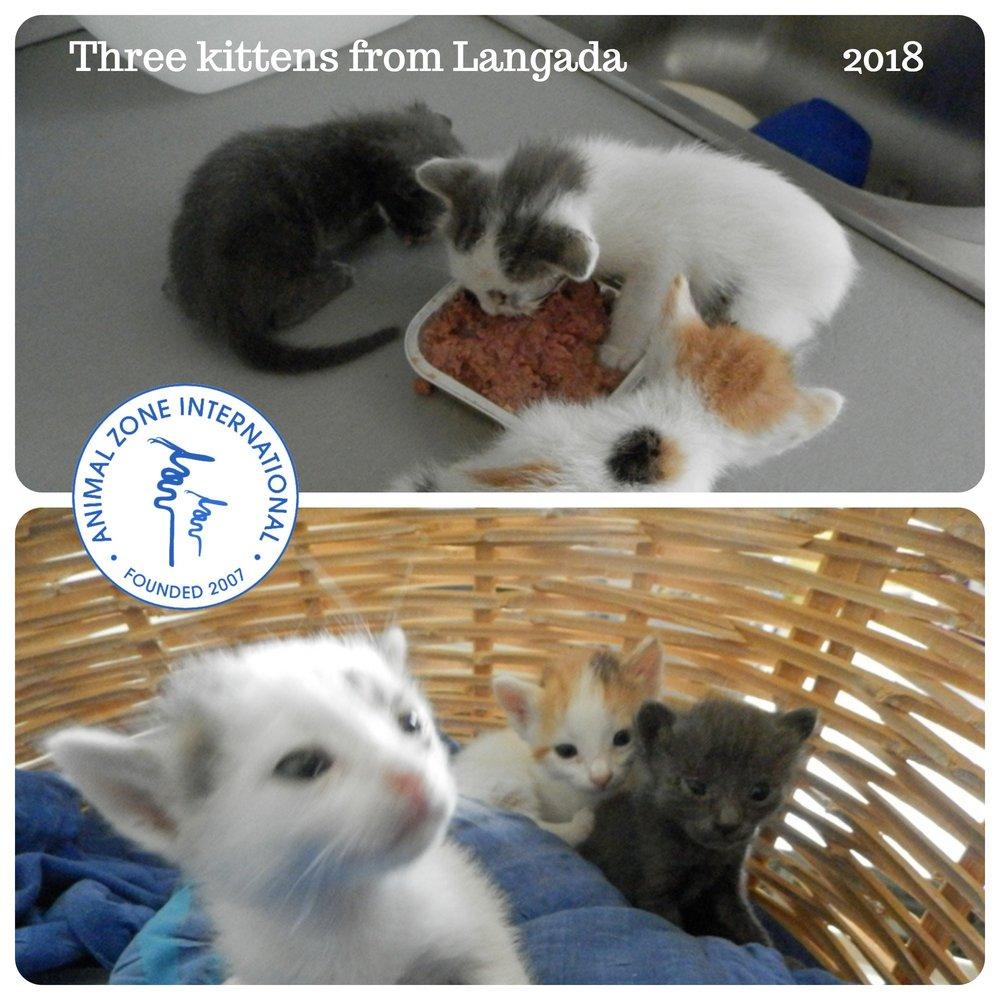 kittenslangada.jpg