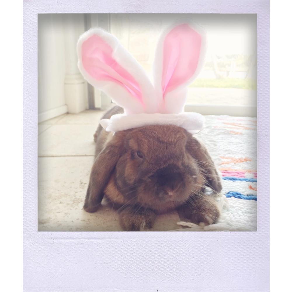 double bunny.