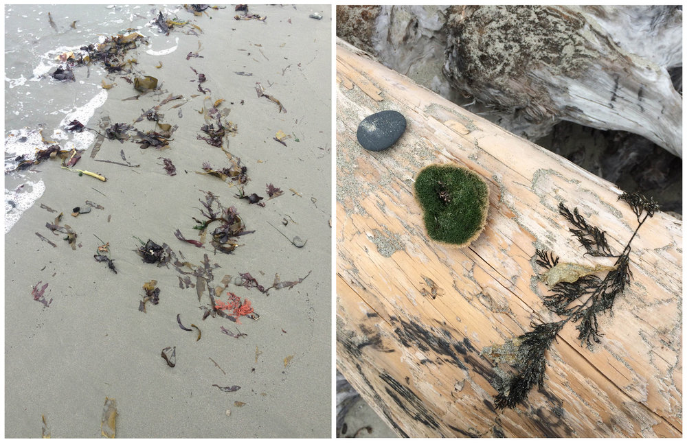 images from Mendocino Beach. photo by Lauren Ardis