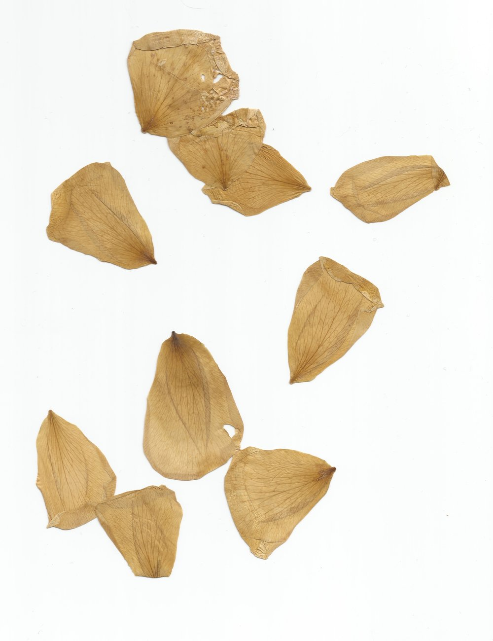 My maternity leave project was going to be creating paintings from dried flowers I collected at special moments during my pregnancy.  Turns out, I don't know how to dry flowers and none of them turned out except these rose petals.  This is from a garden rose Ben picked for me when I found out I was pregnant.