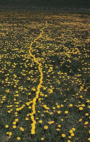 Andy Goldsworthy circa 1970's