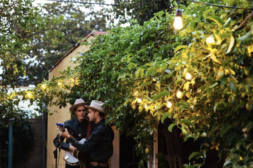 Bluegrass in the backyard