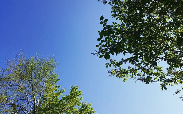 Hard to resist going outside when it looks like that #dayoff #bluesky #summer #trees