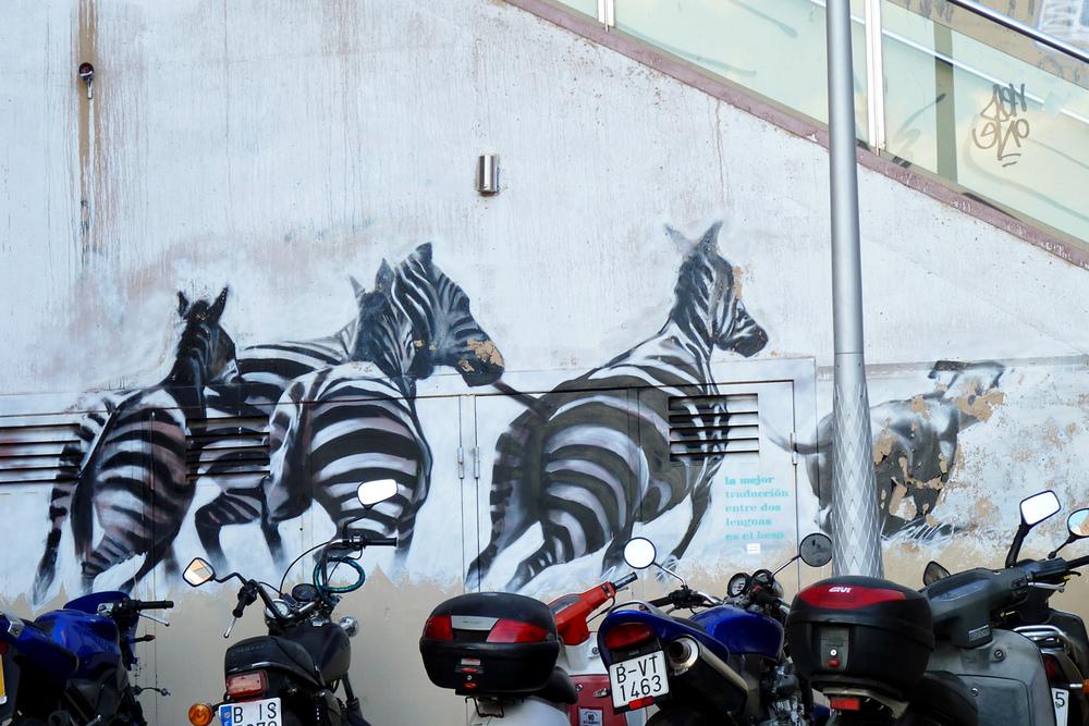 zebras2.jpg