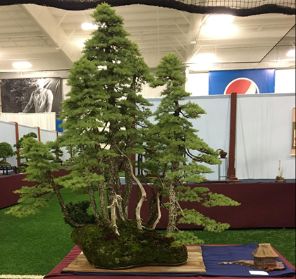 Mountain Hemlock by Michael Hagedorn, Finest Evergreen Bonsai