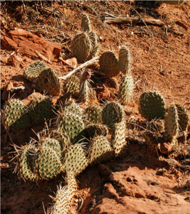 Cacti – it's that dry
