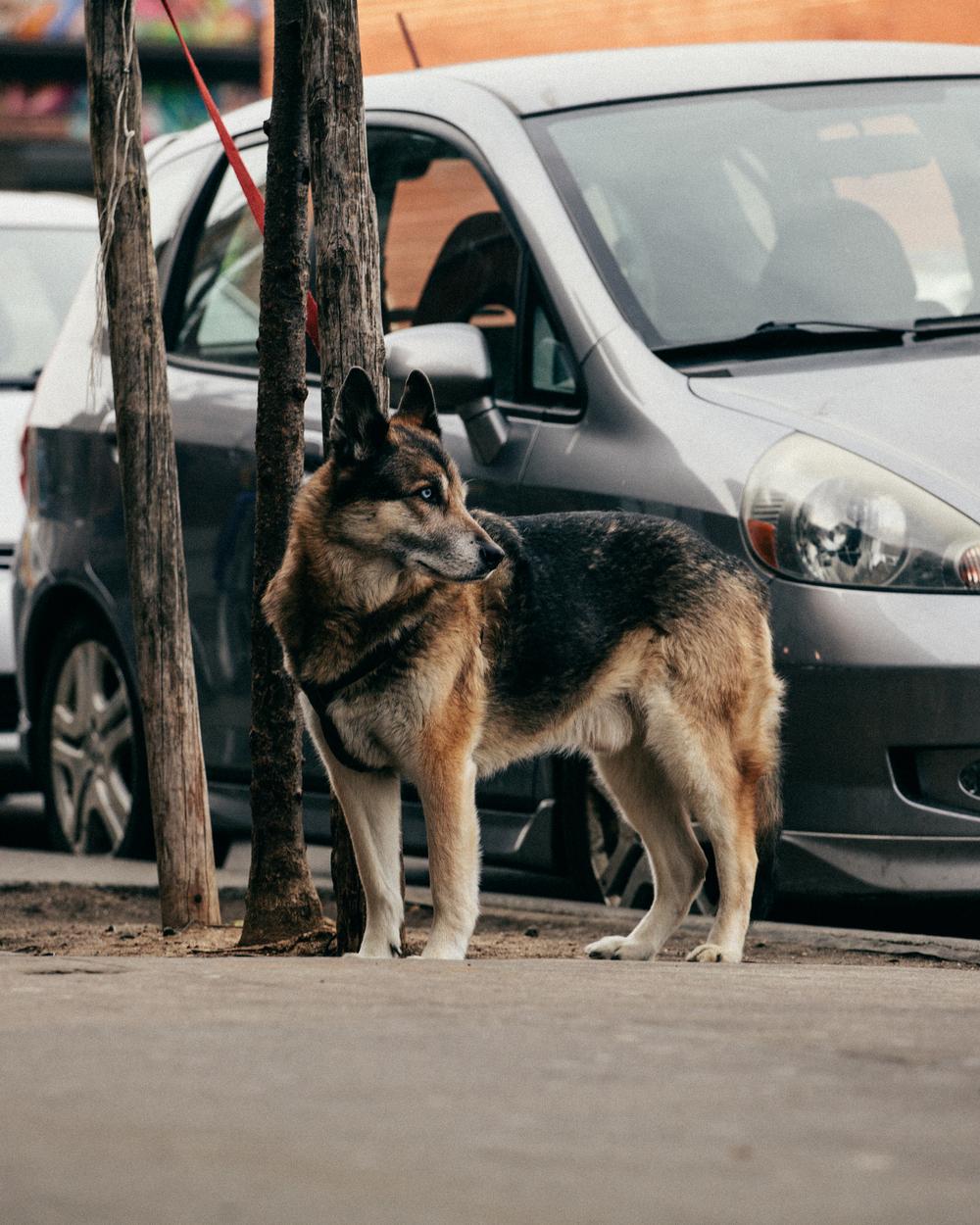 dog 02-17-1.jpg