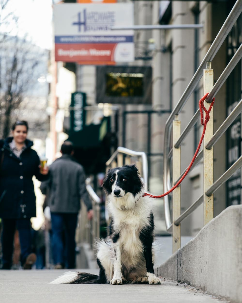 march dog-3.jpg