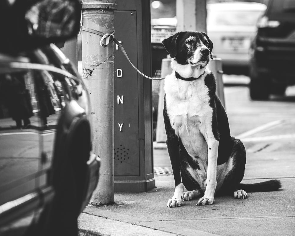 Dog.002.jpg