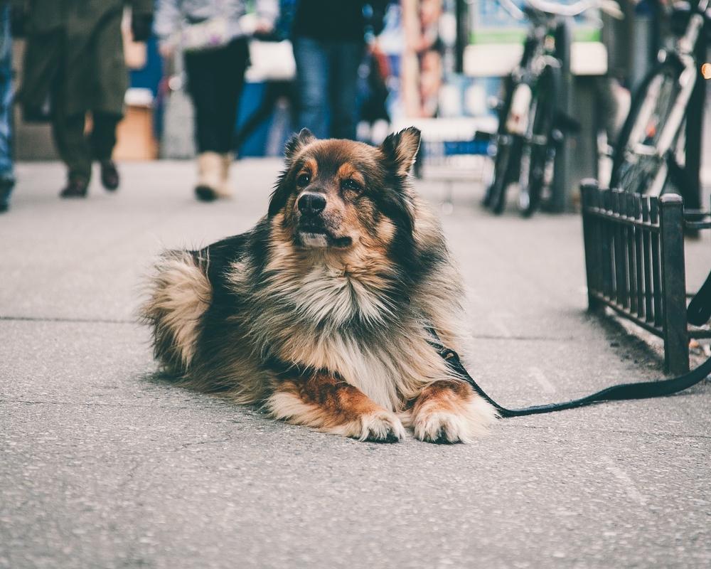 Dog#3 2.jpg