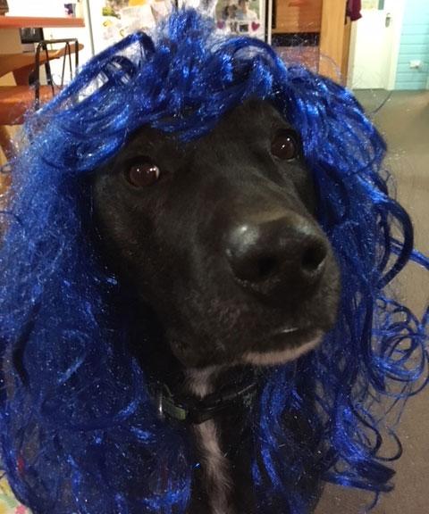 My dog Blue AKA Mr Passive