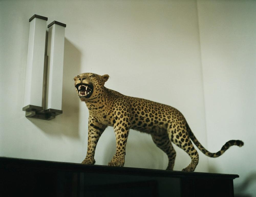 EX 3 Leopard.jpg