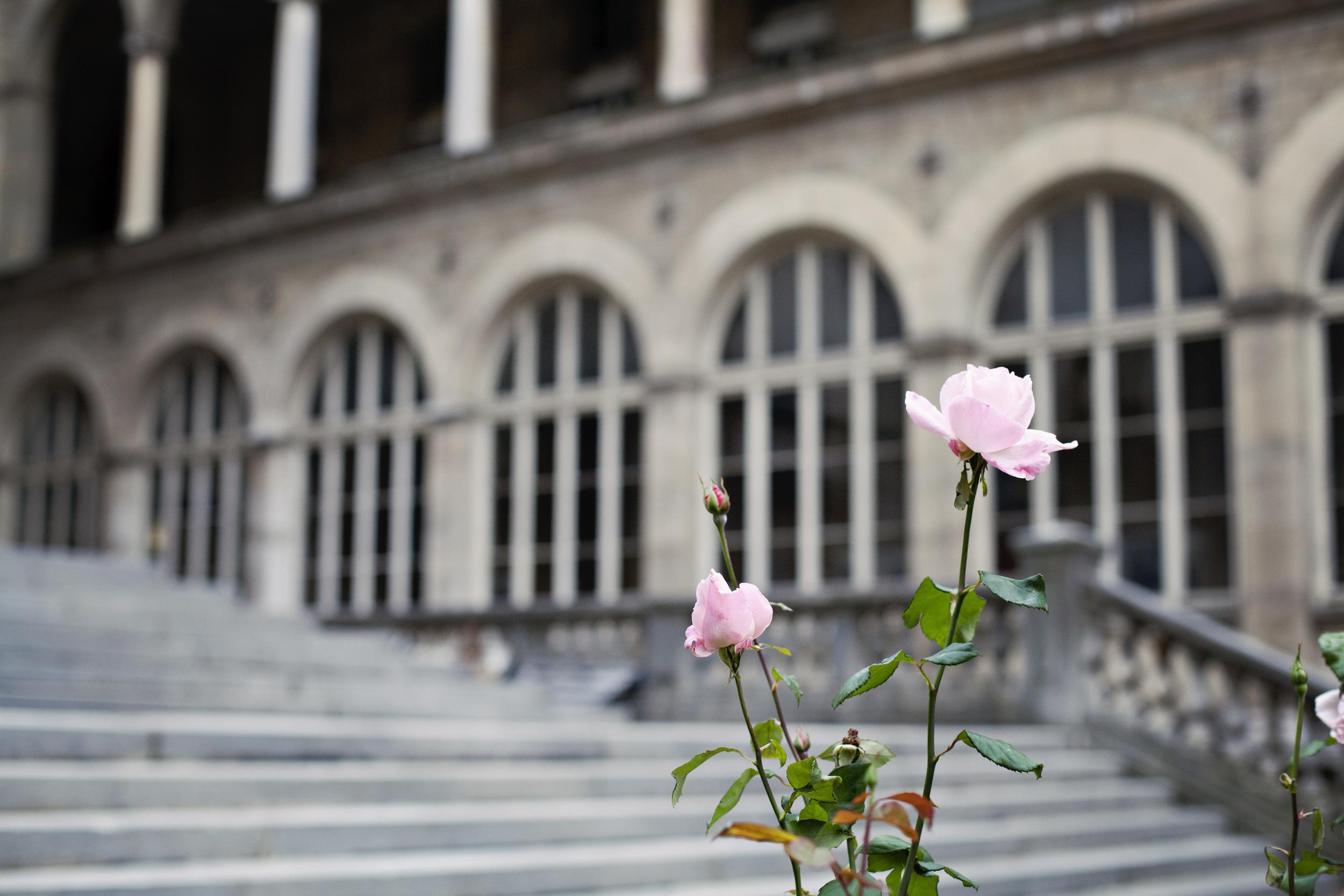Paris_20121010_0528_1