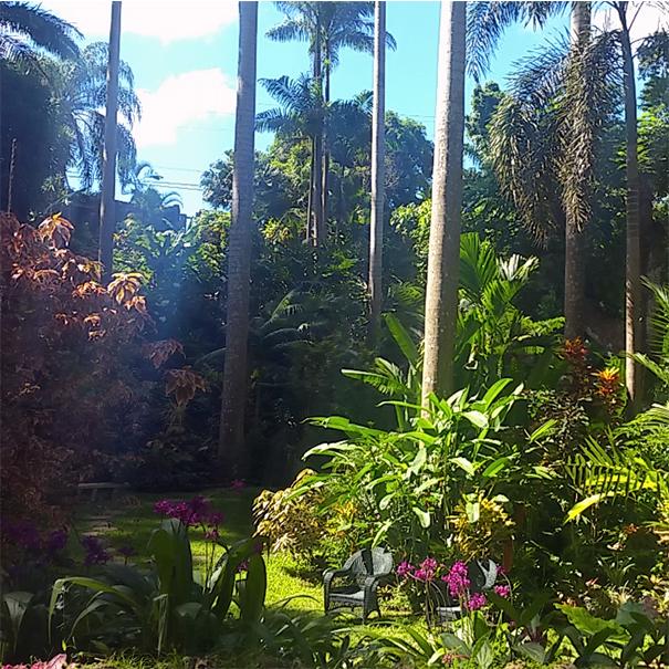 Towering Palms in Hunts Garden