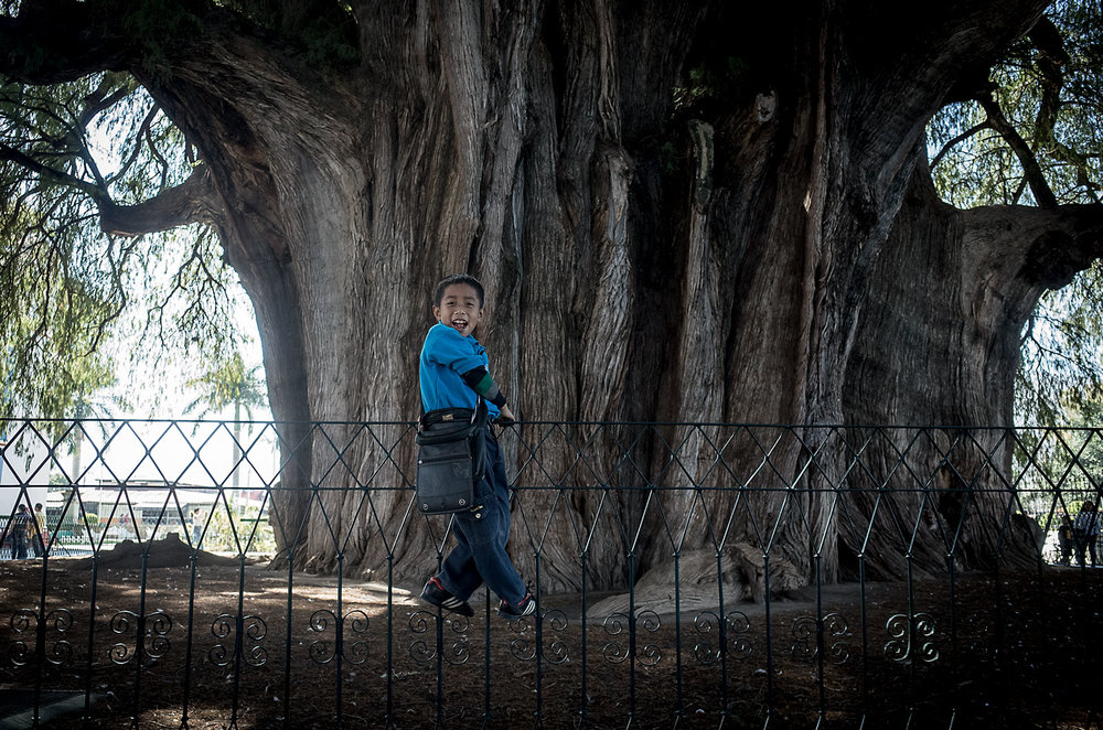 Julio is a  nino guía  (child guide) at the Árbol del Tule in Oaxaca.  The Montezuma cypress tree is the widest in the world with a trunk diameter of 14m and circumference of 45m.  Guides like Julio use handheld mirrors to reflect sunlight at specific features of the tree that resemble familiar objects like  la cuna  (the cribe),  la cara de la bruja  (the witch's face),   and  las patas de jirafa  (the giraffe's legs).