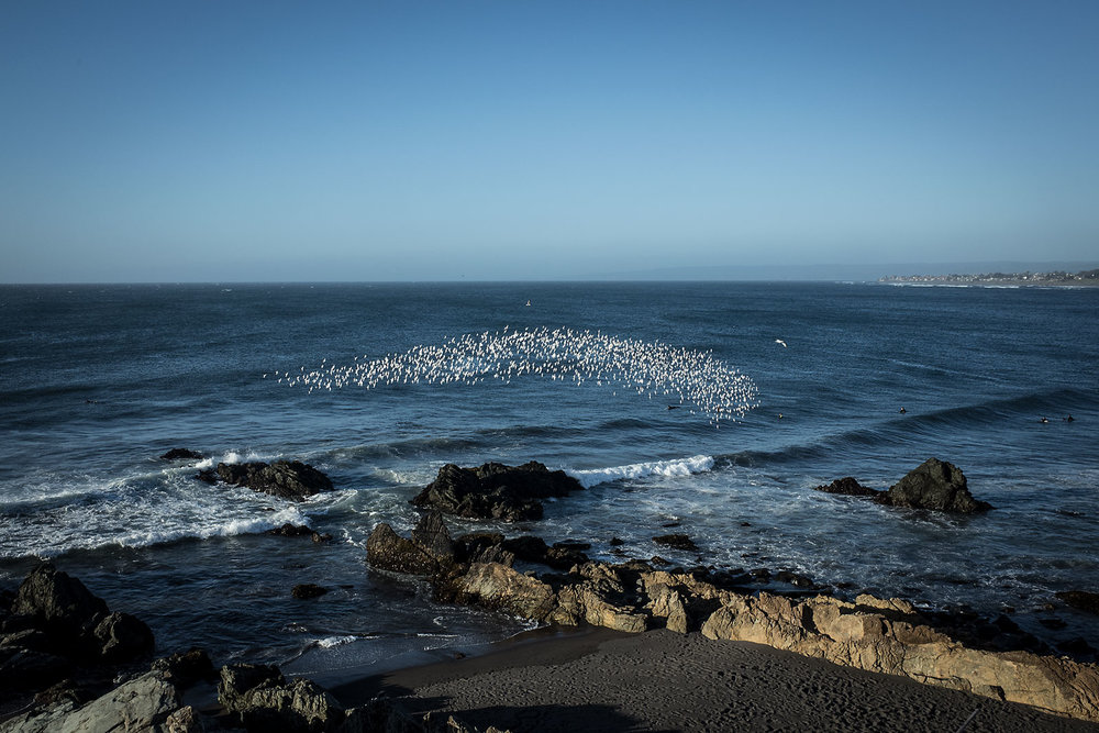 A flock of birds circles over surfers catching evening waves near Pichilemu, Chile.
